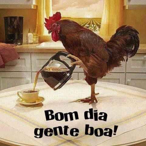 Bom dia gente boa!. Galo preparando um delicioso café e dando bom dia para você!.