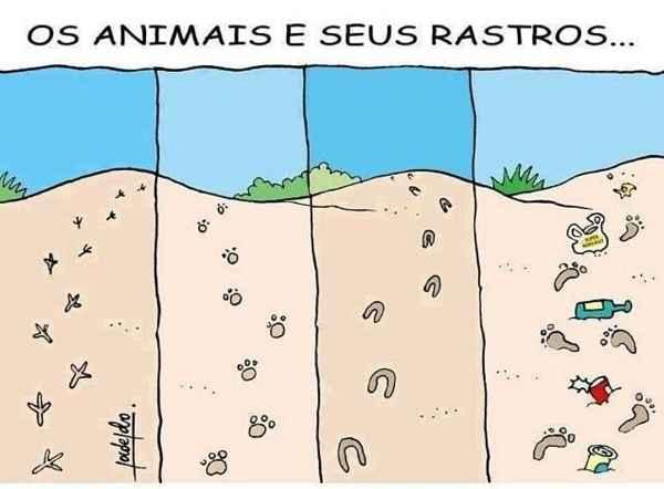 Os animais e seus rastros. Comparação das pegadas de animais e das pegadas humanas na natureza..