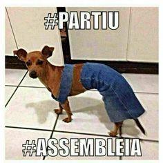 Partiu #Assembleia. Cadela vestida pra assembléia.