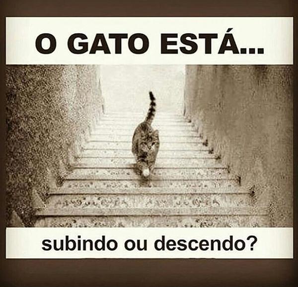 Ilusão de ótica: O gato, está subindo ou descendo?. E aí o que você acha? O gato está subindo ou descendo?.