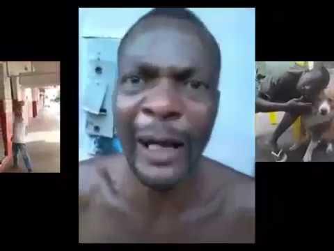 Vídeos mais engraçados do WhatsApp