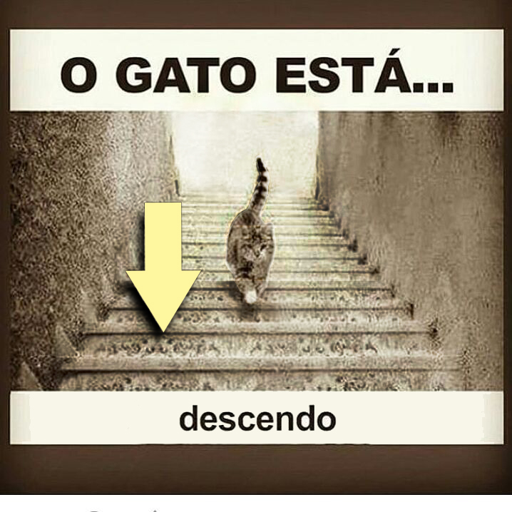 Resposta-o-gato-esta-descendo
