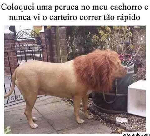 imagens-animais-whatsapp